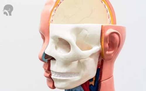 https://klinikrespirasimalang.com/images/berita/261220-tulang-tapis.jpg
